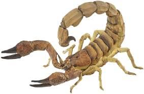 Papo 50209 Skorpion, Spiel, Mehrfarbig