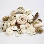Strandmuschelperlen, Größe 9-40 mm, Lochgröße 1-1,5 mm, 120g