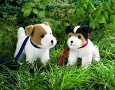 Kösen Jack-Russel-Terrier, stehend