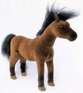 Araber Pferd Kösen