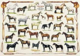International Publishing 0804N00013B - Horses, Klassische Puzzle
